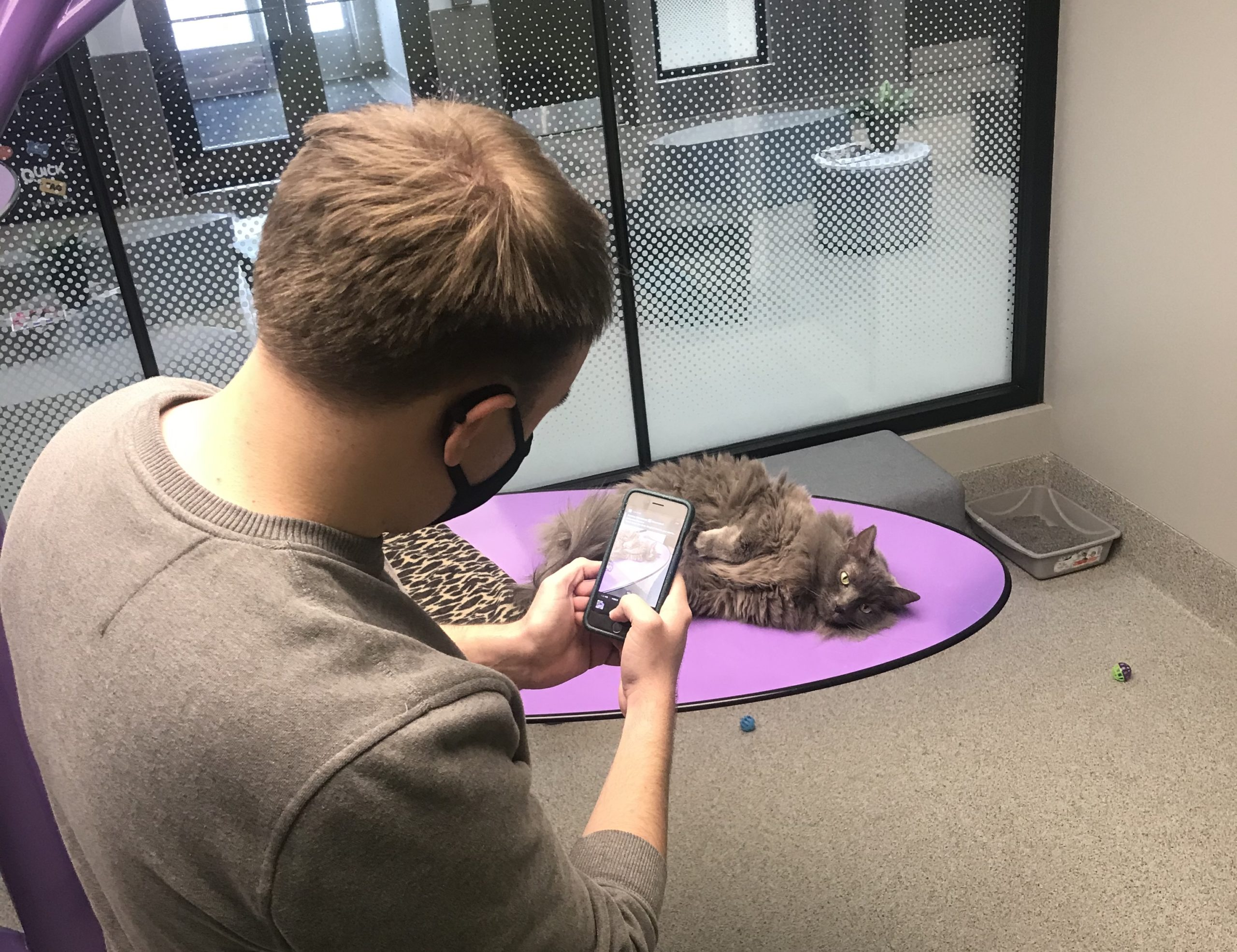Brenden Gepson, a marketing specialist for the Nebraska Humane Society, takes a photo of one of the humane society's cats to post on social media.