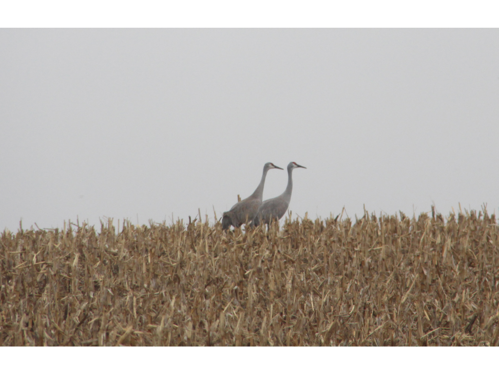 Aeriel Frey 2 - Nebraska's great crane migration exemplifies Mother Earth's bounty