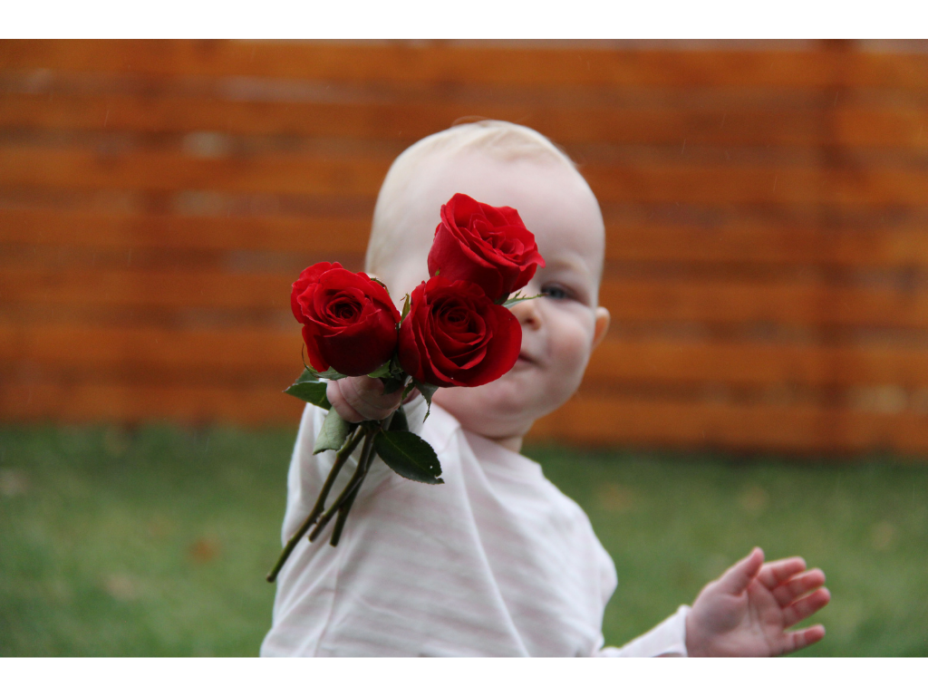 A one year old is shown outside, holding three red roses.
