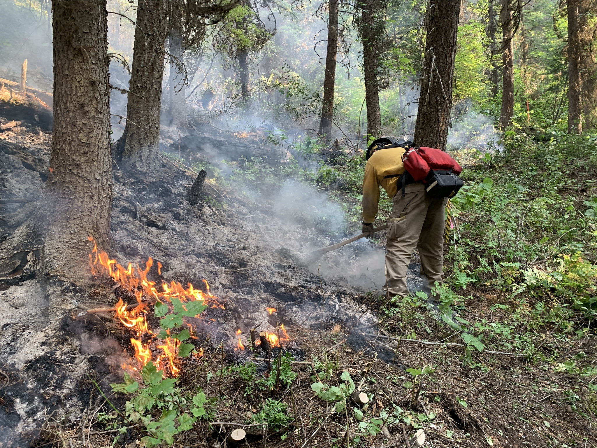 Firefighter containing wildfire in between trees